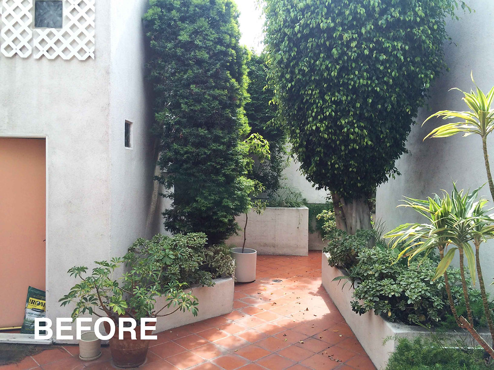 before and after, landscape design, los angeles, drought tolerant