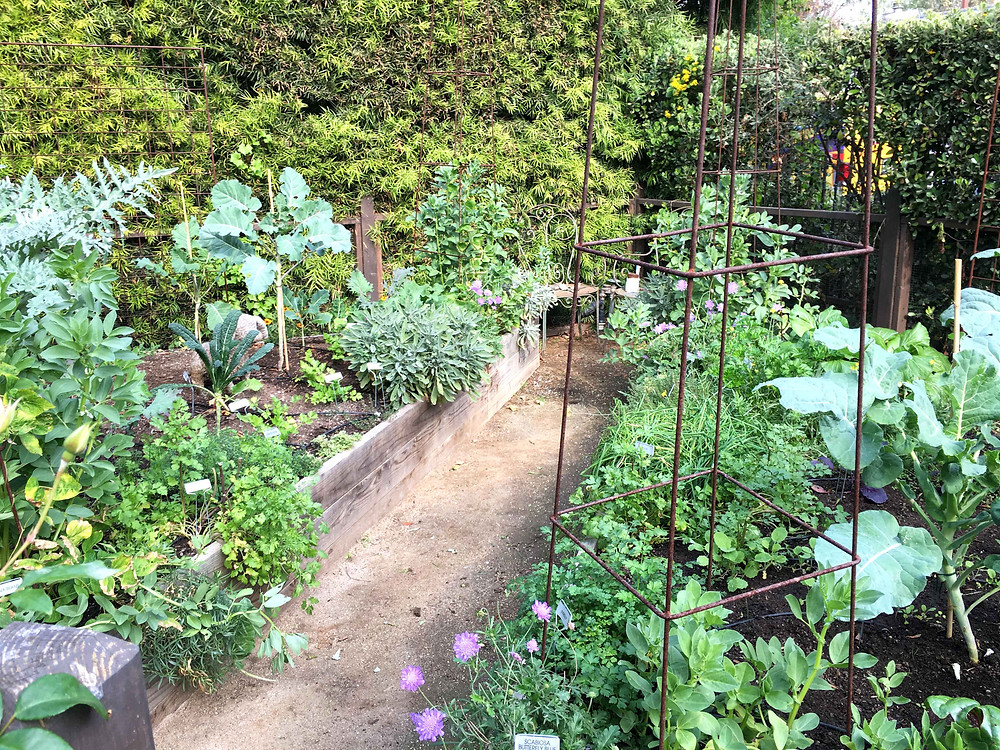 vegetable garden, los angeles, raised beds, garden recipes, drip irrigation, sustainable, drought tolerant