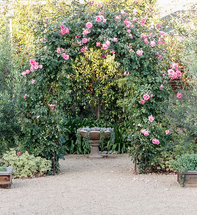 succulents, rose garden, backyard design, landscape design, drought tolerant