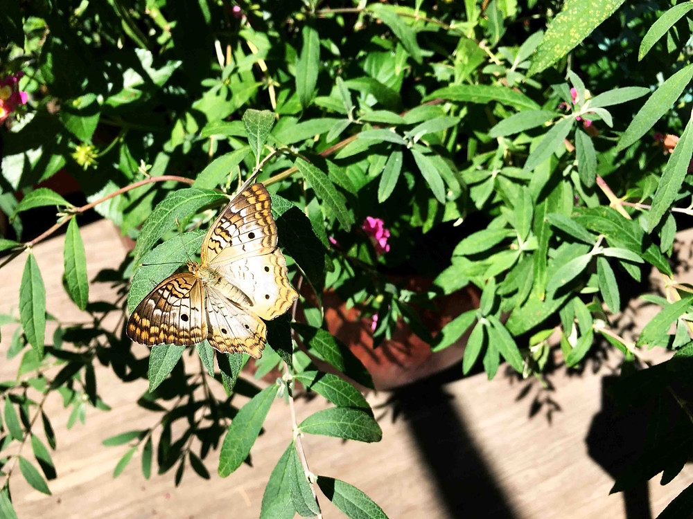 Albuquerque, New Mexico native plants, butterfly pavilion.