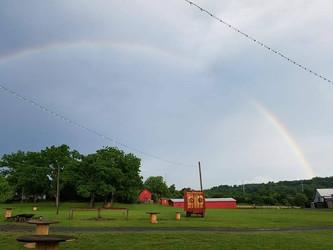 Maple Tree Rainbow.jpg