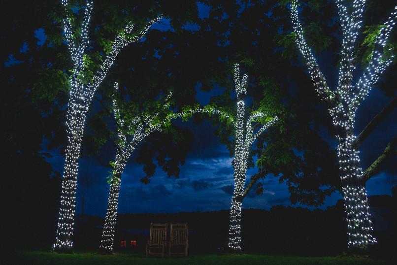maple tree Walnut grove lights green lea