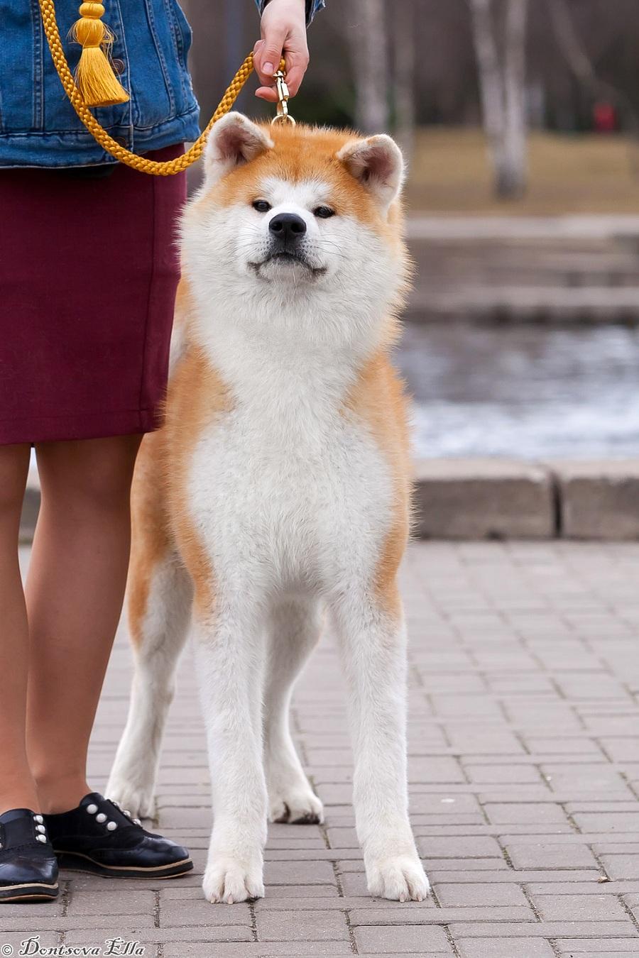 Tsurugi Maru Go Awakoku Hikarinomiya