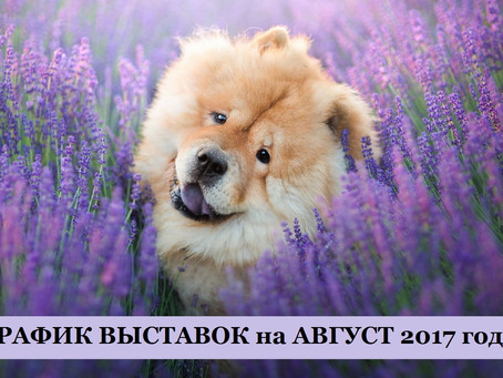 ГРАФИК ВЫСТАВОК на АВГУСТ 2017 года