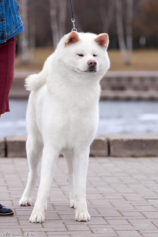 Shiraume Go Awakoku Hikarinomiya