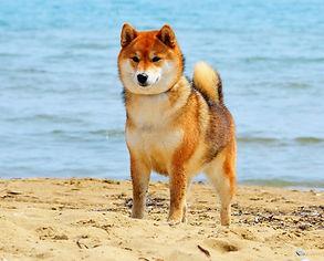 Боня - самая мудрая собака на свете!