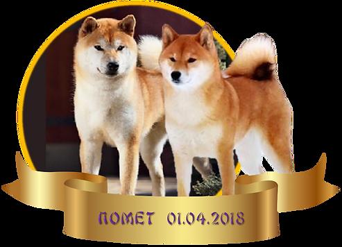 Щенки сиба ину в Москве