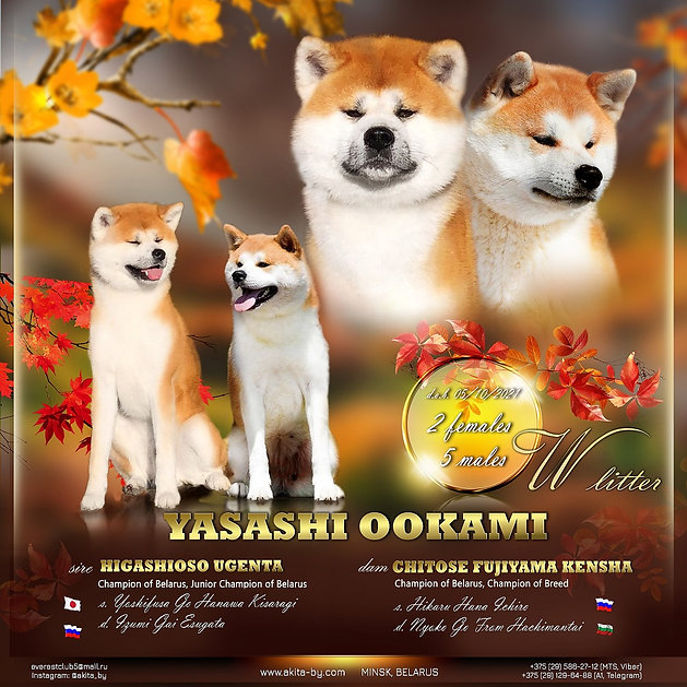 YASASHI OOKAMI-2021 - копия.jpg