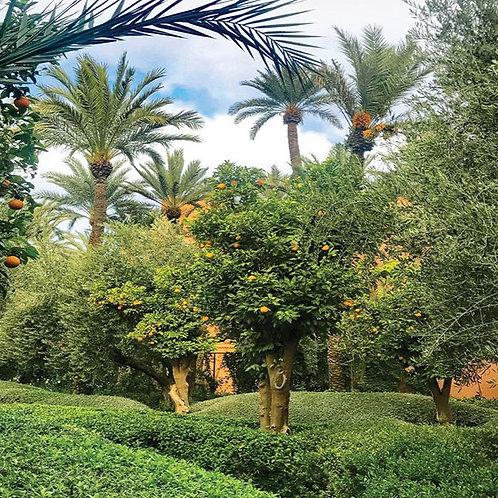 Citrus Garden