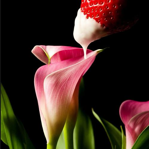 Strawberry & Lily