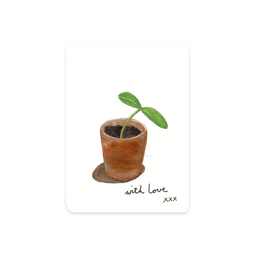Minikarte Kürbispflanze