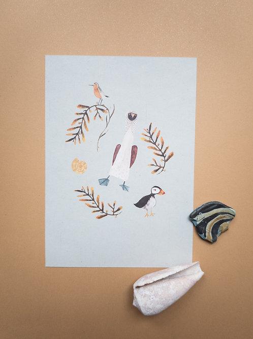 Tölpel | Bär von Pappe