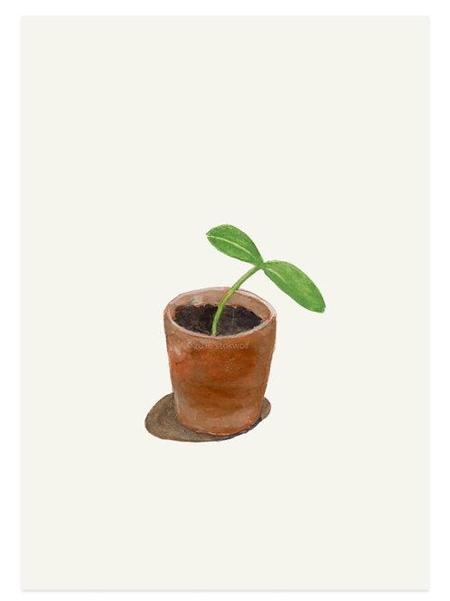 Karte Kürbispflanze