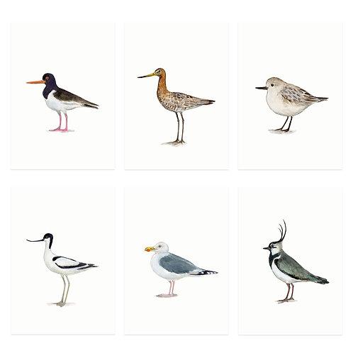 Set Minikarten Vögel