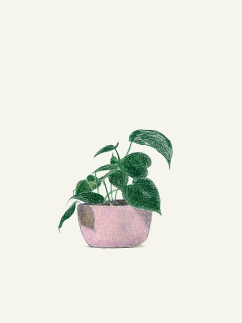 Karte Philodendron