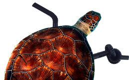 Turtle_colour_cropped.png