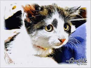 写真を絵画に「Graphite by BeCasso」アプリ