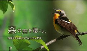 リアルタイムの森の声が聴けるサイト