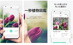 撮るだけで花の名前がわかるアプリPicture This