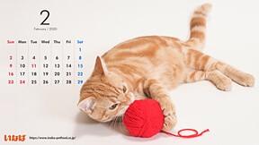 ネコの日です。パソコン・スマホ用猫の壁紙