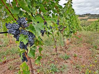 Una leyenda italiana: La madre del vino