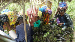 Members Collect Their Bagged Trees for Planting