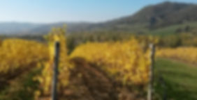 wine trekking appennino