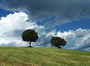 alberi solitari sul cammino di francesco