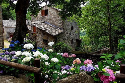 Tresana: Il Borgo delle Ortensie