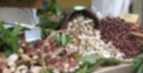 funghi & castagne.jpg