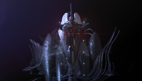 Wind River // The Black Swan