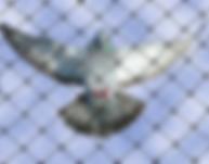 pigeon nets in San Francisco CA