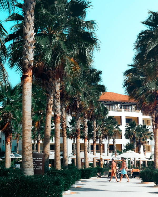 A family arrives at an amazing hotel for families after learning about it on social media. The buildings are tall and have red rooftops and palm trees all around.