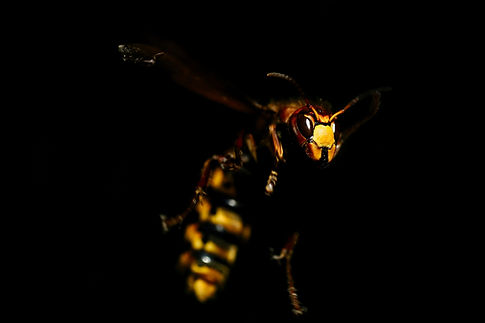 macro-photography-of-wasp-2617610.jpg