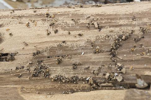 bigstock-Termite-Damage-Rotten-Wood-Eat-