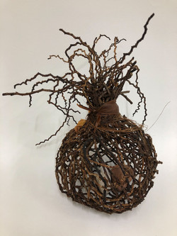Form12 Bangalow Palm
