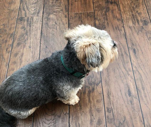 A dog on wood flooring