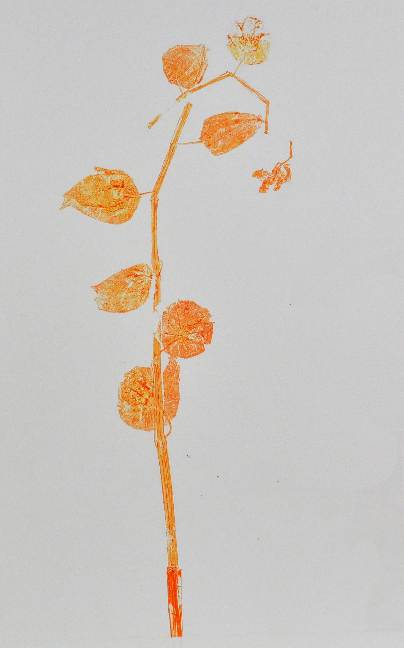 orange monoprint light