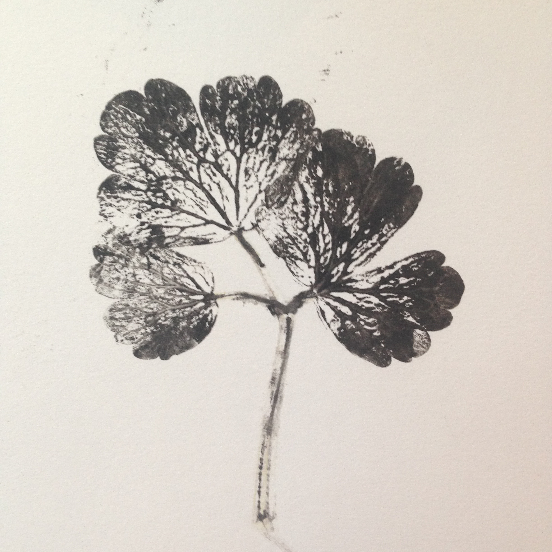 Leaf mono - print