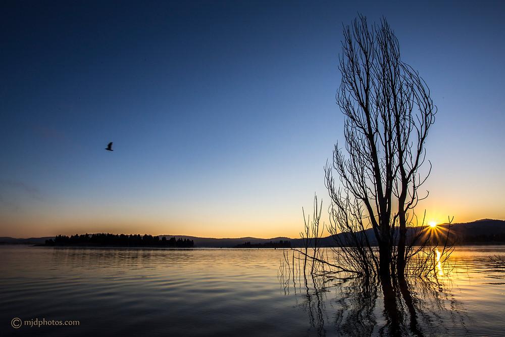 lake jindy bird sunrise.jpg
