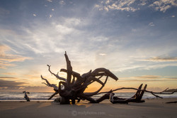 beachdriftwood1
