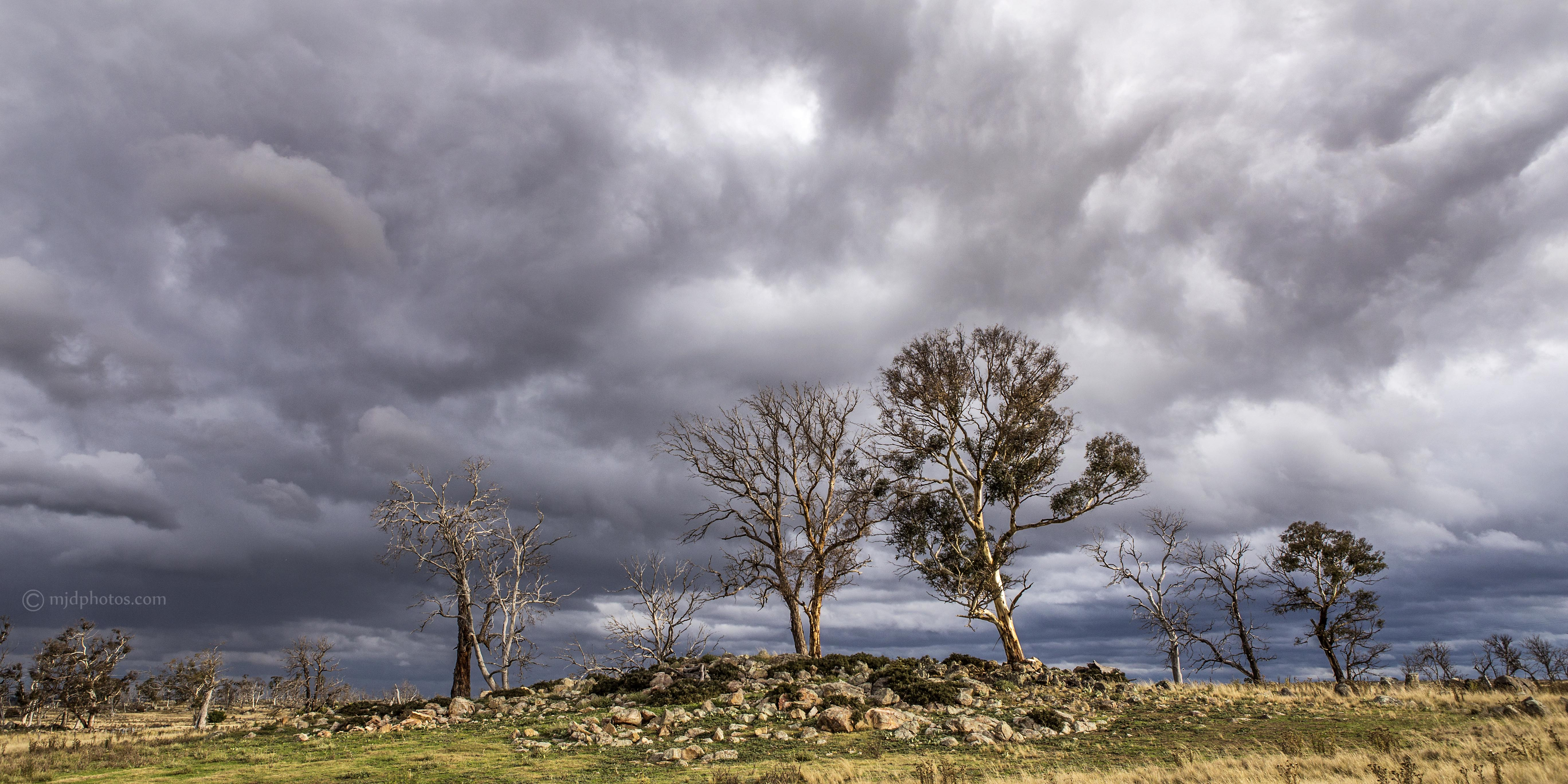 stormy sky eucalypt paddock