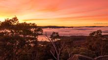 Foggy Sunrises
