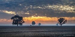 Trangie sunrise.jpg
