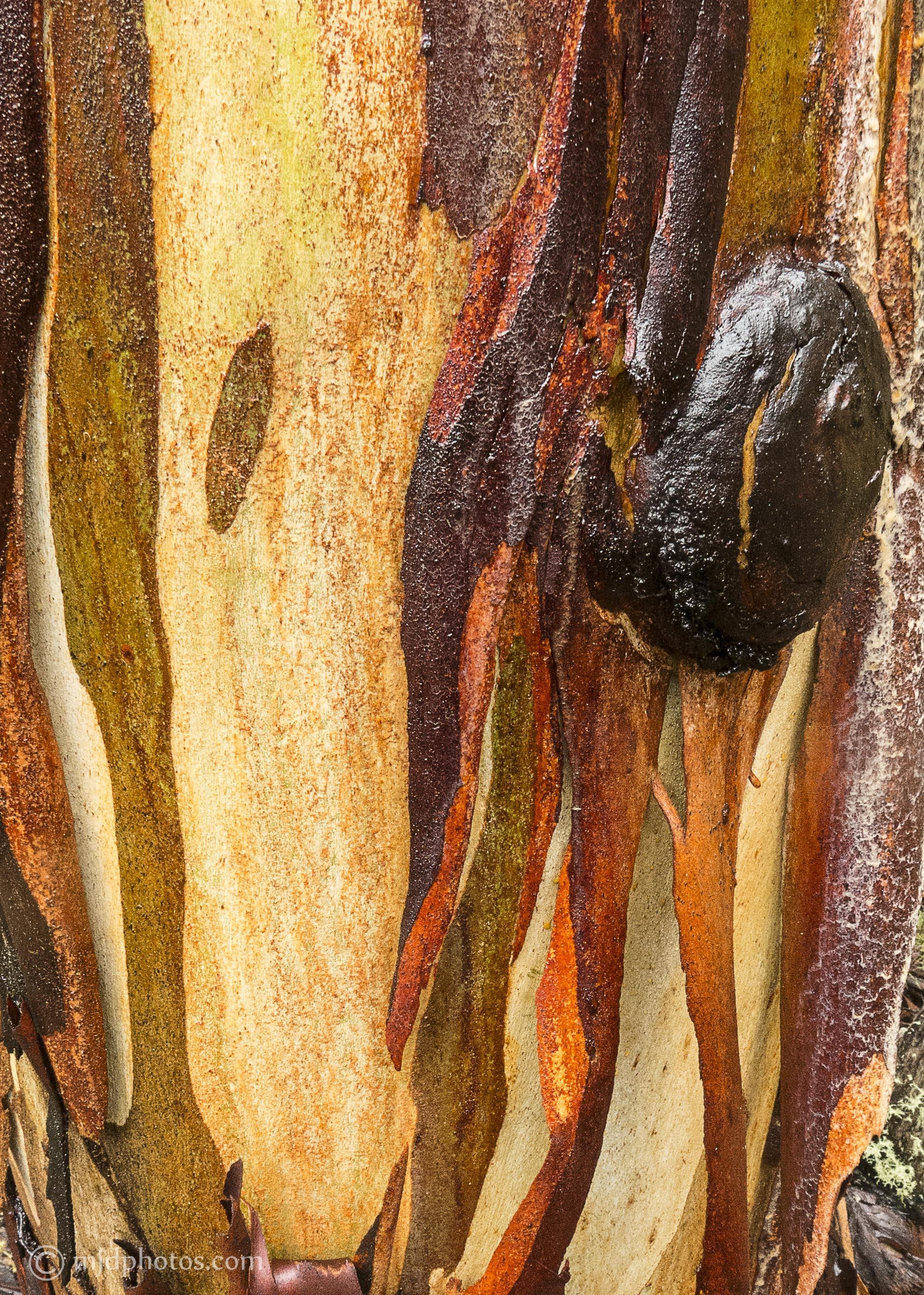wet bark 2