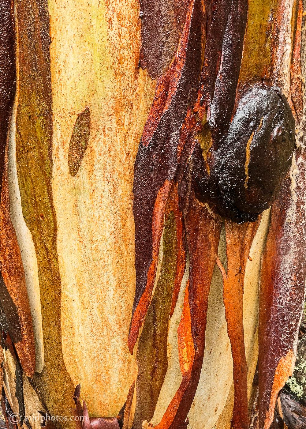 wet bark 2.jpg