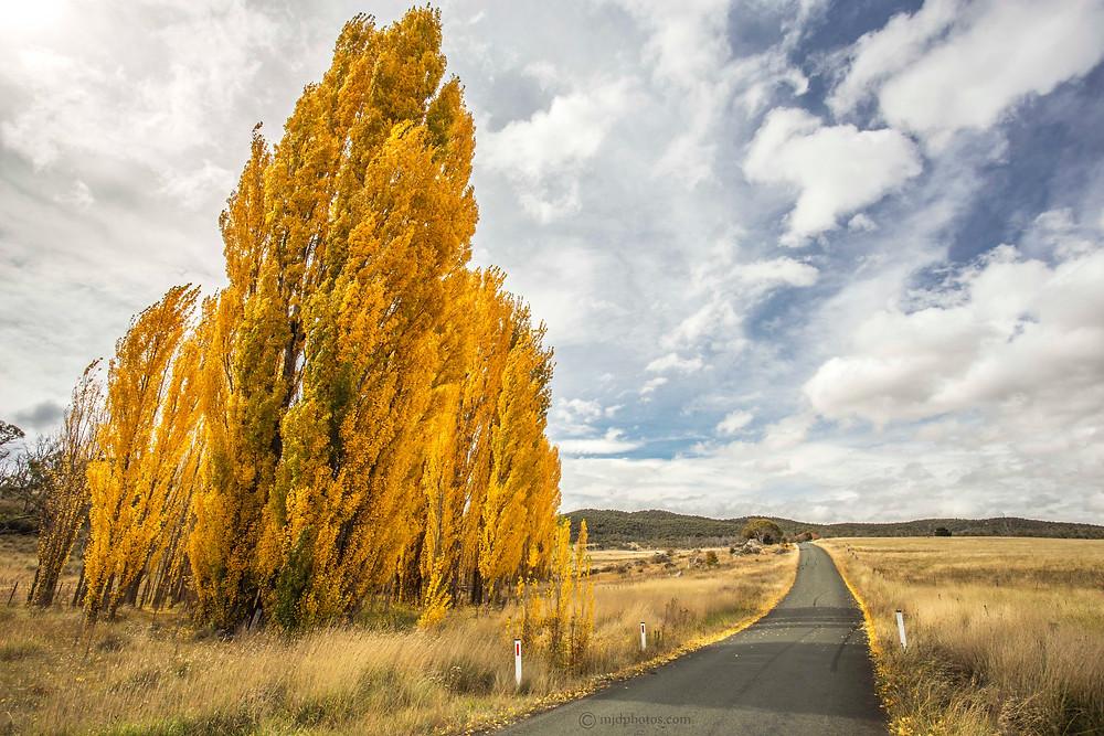 the golden highway.jpg