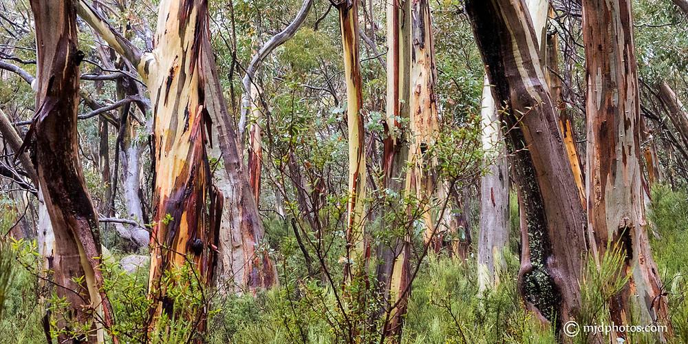 wet forest 2.jpg