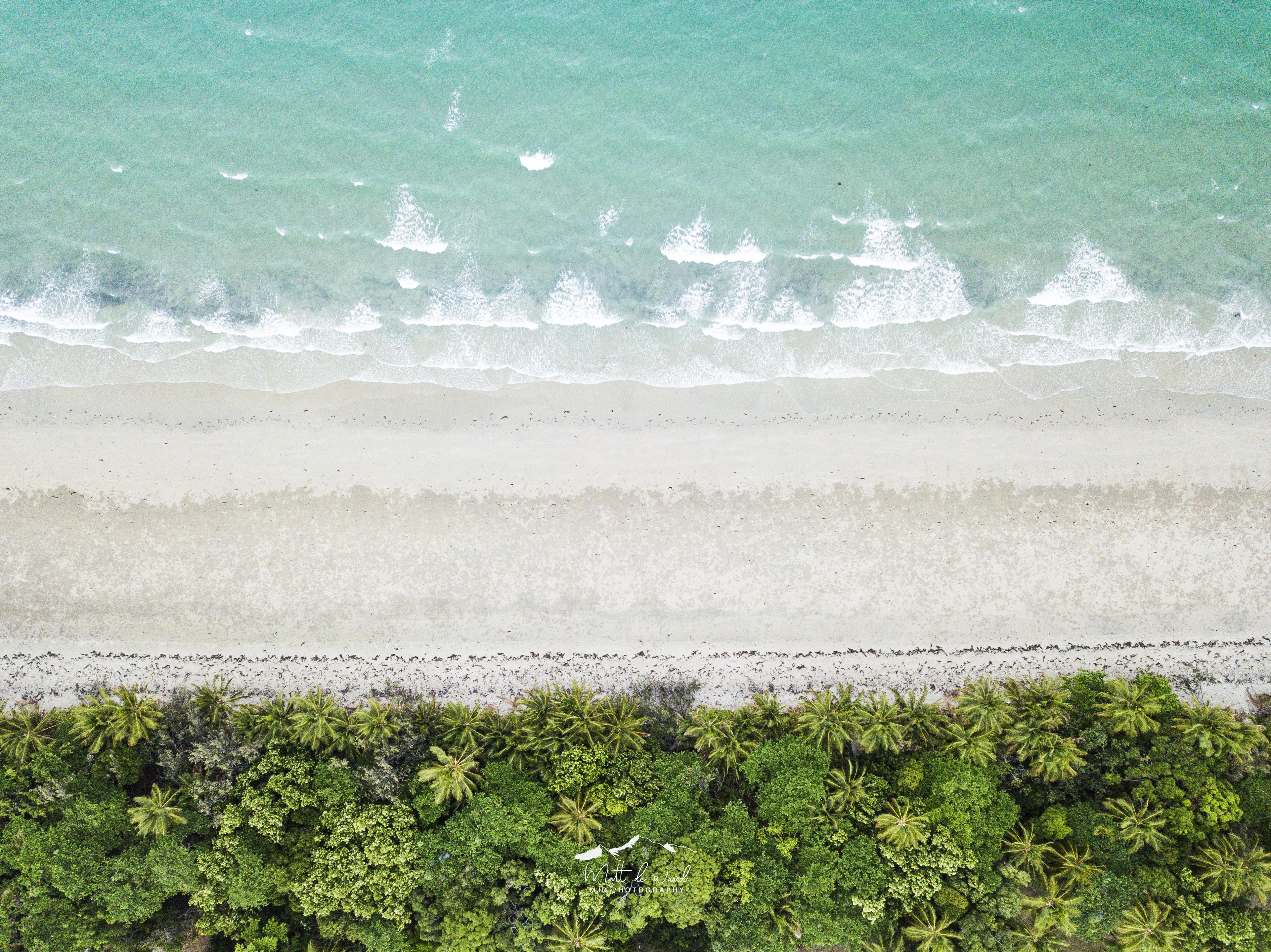 beachpalmsabove