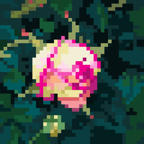 Rosy.png